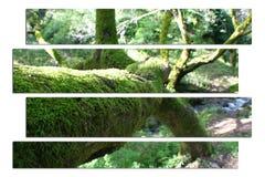 Ursnyggt träd Art In Jungle High Quality arkivfoton