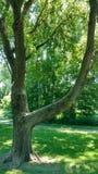 Ursnyggt träd i parkera Royaltyfri Bild