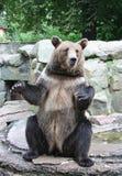 Urso imagens de stock royalty free