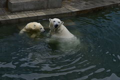 Urso Foto de Stock