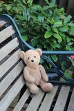Urso amado poço Fotos de Stock