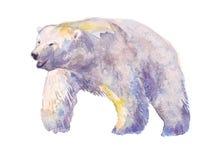 Urso, aquarela, esboço, pintura, animais, ilustração Fotografia de Stock Royalty Free