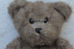 Urso bonito da peluche Imagem de Stock