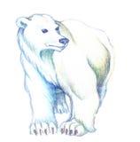 Urso branco ilustração royalty free