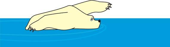 Urso branco polar nadador Foto de Stock Royalty Free