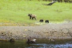 Urso com filhotes Imagens de Stock