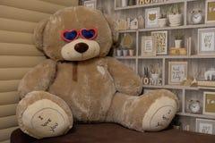 Urso com vidros fotografia de stock royalty free