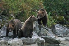 Urso da família Fotos de Stock Royalty Free