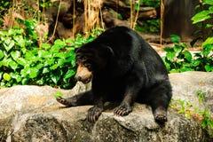 Urso de assento Foto de Stock