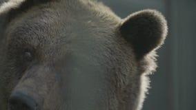 Urso de Brown filme