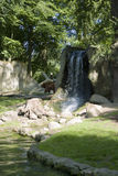 Urso de Brown em cachoeiras Foto de Stock Royalty Free