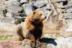 Urso de Brown em rochas e em olhar da água afastado foto de stock royalty free