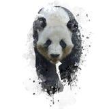 Urso de panda gigante ilustração royalty free