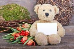 Urso de peluche Foto de Stock