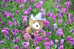 Urso de peluche bonito no campo de dasies do lavander Imagens de Stock Royalty Free