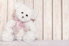 Urso de peluche branco Fotos de Stock