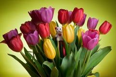 Urso de peluche branco nos tulips Foto de Stock Royalty Free