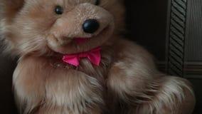 Urso de peluche com uma curva vermelha que senta-se no sofá vídeos de arquivo
