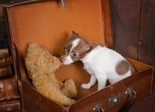 Urso de peluche dos amores de filhote de cachorro Fotografia de Stock Royalty Free