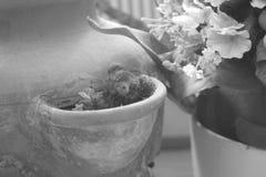 Urso de peluche e uma vasilha de barro Fotos de Stock Royalty Free
