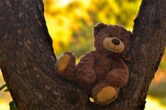 urso de peluche em uma floresta do pinho imagens de stock