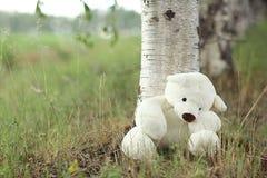 Urso de peluche perto de uma árvore Imagem de Stock