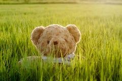 Urso de peluche, urso de peluche que senta-se na grama imagens de stock