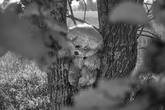 Urso de peluche triste entre duas árvores na floresta do outono imagem de stock royalty free