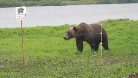 Urso delicadamente marrom video estoque