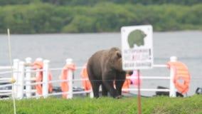 Urso delicadamente marrom filme