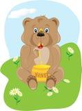 Urso do bebê que come o mel Fotos de Stock