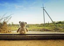 urso do brinquedo fotos de stock