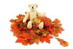 Urso do outono foto de stock