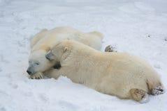 urso dos amantes Imagens de Stock