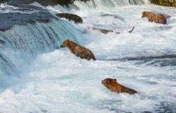 Urso em Alaska imagens de stock royalty free