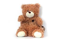 Urso em um fundo branco fotografia de stock royalty free