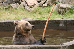 Urso em um parque Fotos de Stock