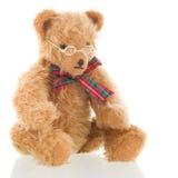 Urso inteligente isolado sobre o fundo branco Fotografia de Stock