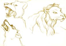 Urso, leão e lobo ilustração royalty free