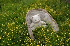 Urso na cadeira de madeira Imagens de Stock