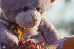 Urso no fim da cadeira acima com cherrys Fotos de Stock