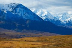 Urso no parque nacional de Denali fotografia de stock royalty free
