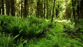 Urso pardo que pesca no lago do Alasca video estoque