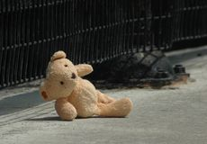 Urso perdido Imagens de Stock Royalty Free