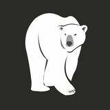 Urso polar Fotos de Stock Royalty Free