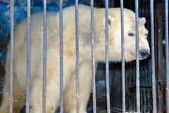 Urso polar atrás das barras em uma gaiola do jardim zoológico foto de stock