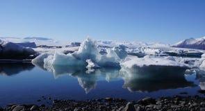 Urso polar no lago da geleira de Jökulsarlon imagem de stock