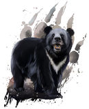 Urso preto com caixa branca Imagem de Stock