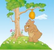Urso que come o mel Imagens de Stock