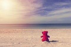Urso vermelho sozinho na praia Imagem de Stock Royalty Free